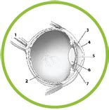 Eye Diagram For Quiz by Science Worksheets Pdf And For