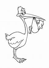 Stork Coloring Pages Print Coloringtop sketch template