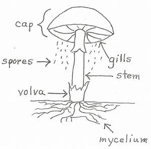 Key Of A Mushroom Diagram