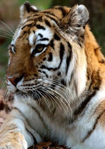 Endangered Animals Wallpapers - endangered animals high definition wallpapers cool