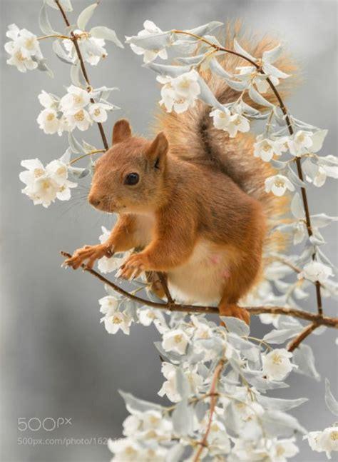 do squirrels like oranges 25 beste idee 235 n over dieren op pinterest huisdieren schattige dieren en babyluiaar