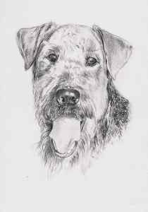 hundeportraits hundegemaelde und zeichnungen atelier