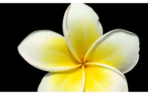 White Yellow Flowers  Pictures  Youtube