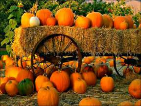 Pumpkin Picking Ma by Autumn Autumn Wallpaper 32352980 Fanpop