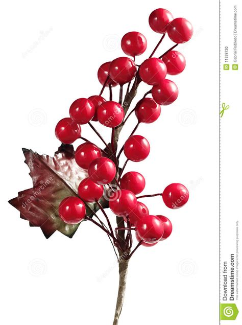 christmas cherry stock photo image