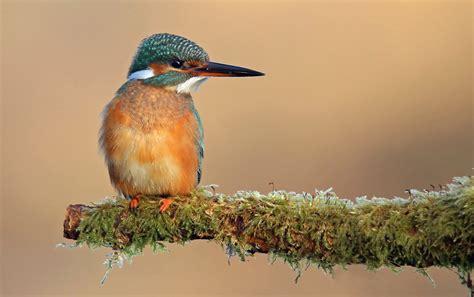 gada putns - Putni dabā