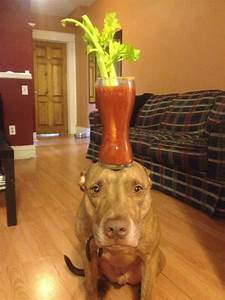 A Dog Owner Takes Funny Photos Of Its Dog By Putting Various Objects On Its Head  Photo Gallery