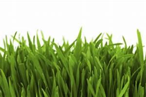 Semer Gazon Periode : plantation gazon tout savoir sur la pr paration et les ~ Melissatoandfro.com Idées de Décoration
