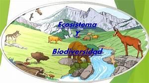 Ecología, Medio Ambiente, Ecosistema, Cadenas y Redes Troficas