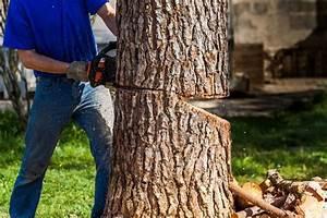 Welche Bäume Darf Man Nicht Fällen : baum f llen wann es erlaubt ist wie es geht vieles mehr sch ner wohnen ~ A.2002-acura-tl-radio.info Haus und Dekorationen