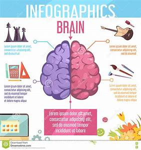 Brain Cerebral Hemispheres Functions Infographic Poster ...