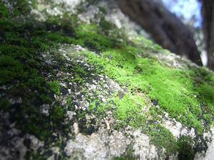 Green Moss On Rock Free Stock Photo