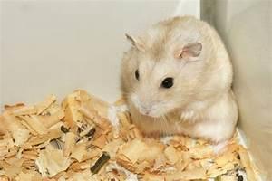 Cute and Funny Pet Rat Names