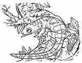 Gecko Coloring Pages Printable Getcolorings sketch template