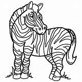 Coloring Pages Zebra Printable Popular sketch template