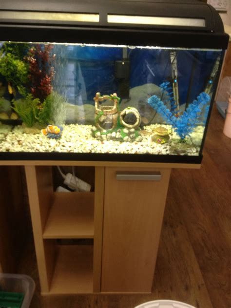 fish aquarium for sale i tropical fish tank for sale smethwick west midlands pets4homes