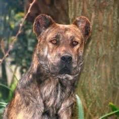 1000 images about dogs on pinterest sheds dog breeds