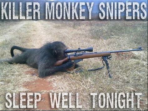 Nighty Night Meme - funny flying monkey memes