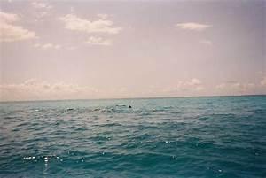 Blitz Reisen Südafrika : kapstadt reisen s dafrika delfine ~ Kayakingforconservation.com Haus und Dekorationen