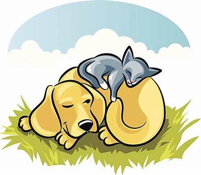 Cat Dog Sleeping Clip Vector Illustrations Similar