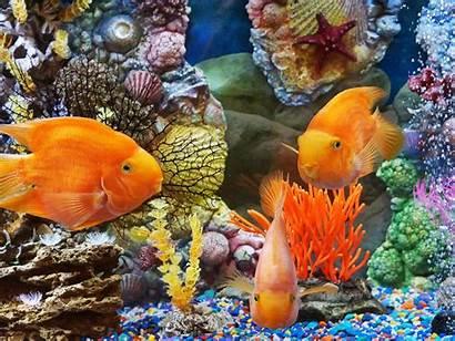 Fish Desktop Tropical Underwater Background Reef Wallpapers