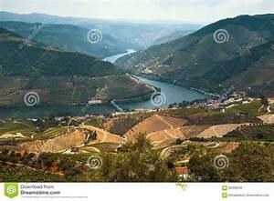 Fluss In Portugal : douro tal portugal draufsicht von fluss stockbild bild von field gr n 93306049 ~ Frokenaadalensverden.com Haus und Dekorationen