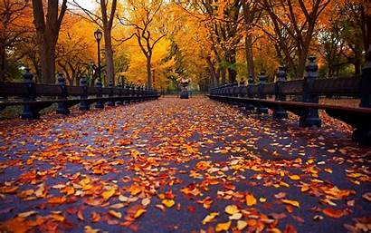 York Autumn Park Bench Nature Leaves Avenue