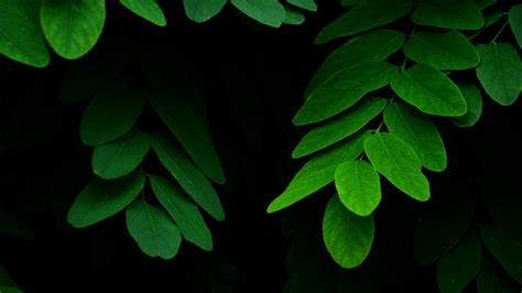 green leaves  ultra hd wallpaper background image