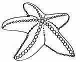 Starfish Coloring Pages Getdrawings sketch template