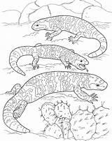 Lizard Coloring Lizards Fat sketch template