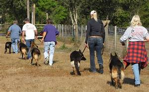 5 reasons to take your dog to discipline classes With dog discipline classes