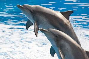 COMMENTARY: Fight dolphin poaching in Japan! | Stripes Okinawa