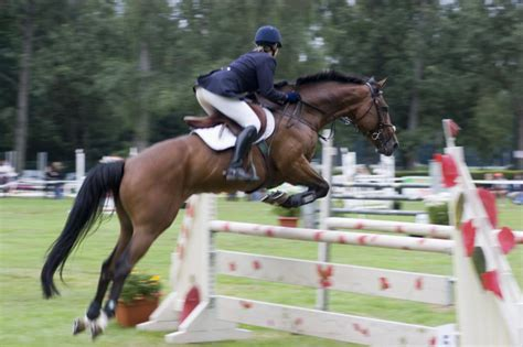 jumping horse breeds hipico events fe santa