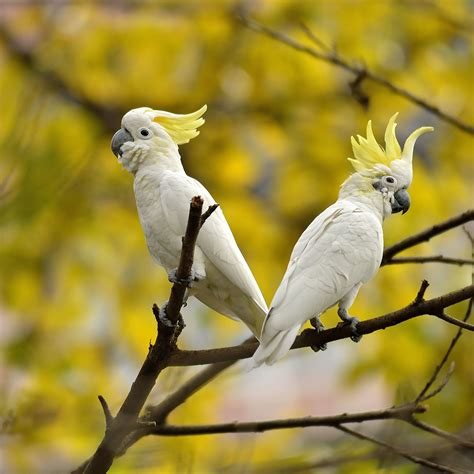 popular large birds    pets