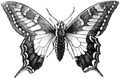 lepidopteros insectos artropodos invertebrados reino