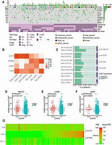Correlation Between Cd47 Expression And Driver Gene Mutations In Nsclc