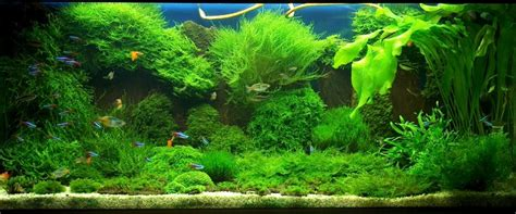Aquascape Moss by Armin S 4 Ft Moss Aquascape