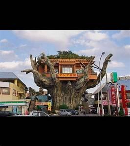 Profondeur Des Racines D Un Figuier : d couvrez un restaurant construit dans un arbre en images ~ Nature-et-papiers.com Idées de Décoration