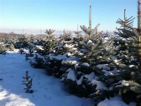weihnachtsbaum selber schlagen dresden weihnachtsbaum selber schlagen dresden my