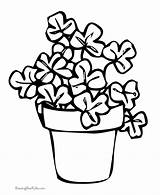 Coloring Shamrock Pages Shamrocks St Printable Patricks Clover Colouring Clip Patrick Flower Plant Cliparts Sheets March Colour Raisingourkids Clipart Popular sketch template