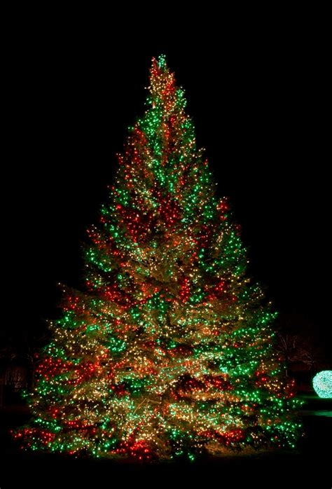 outside christmas tree lights 60 most popular christmas tree decorations ideas a diy