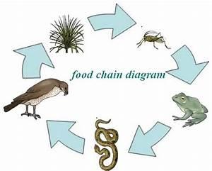 Physics Impact: food chain diagram