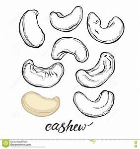 Cashew Nuts Isolated On White Background. Vector Set ...