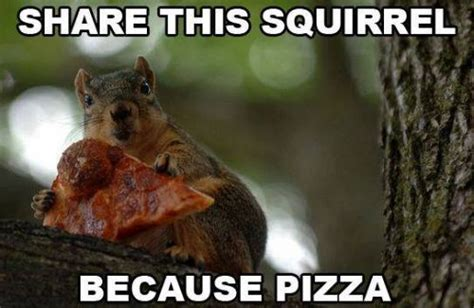Squirrel Memes - pizza squirrel meme slapcaption com the best of slapcaption com