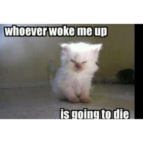 Mad Kitty Meme - mad cat memes www imgkid com the image kid has it