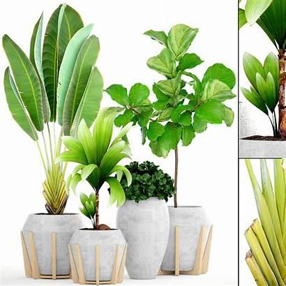 Tropical Plants Plant Pot Models Cgtrader