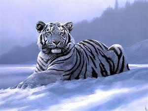Tigre blanco en la nieve fondos de pantalla HD fondos de ...