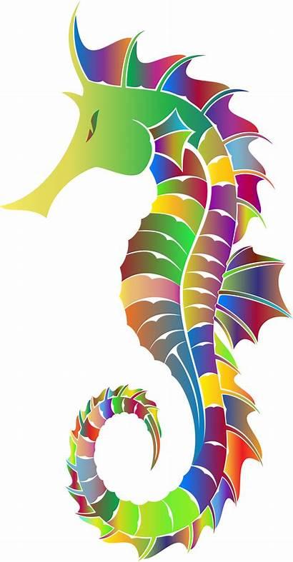 Seahorse Silhouette Sea Poissons Tubes Ou Gifs