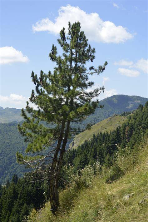 Botanika e alpeve - Porta Vendore