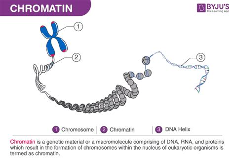 chromatin structure function